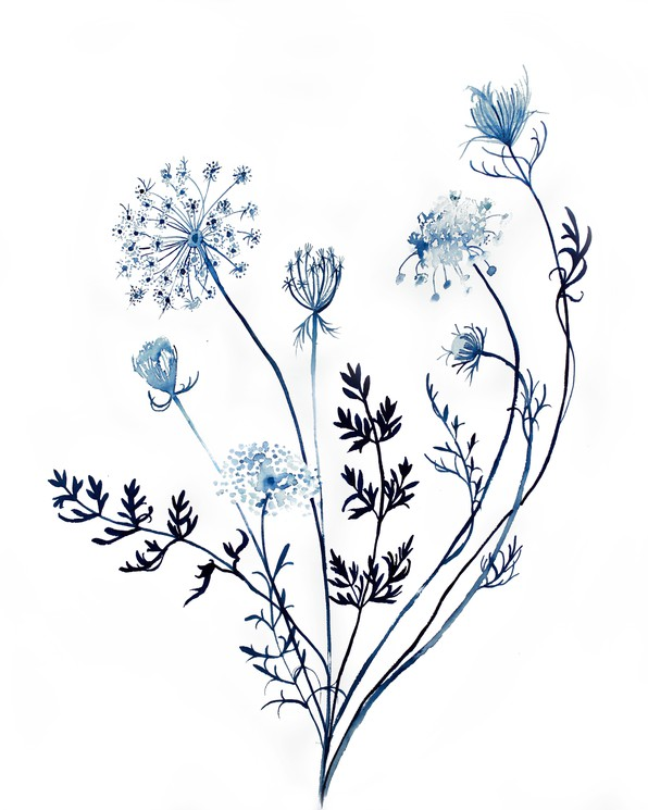 Queen Anne's Lace #97470 - PNG Images - PNGio